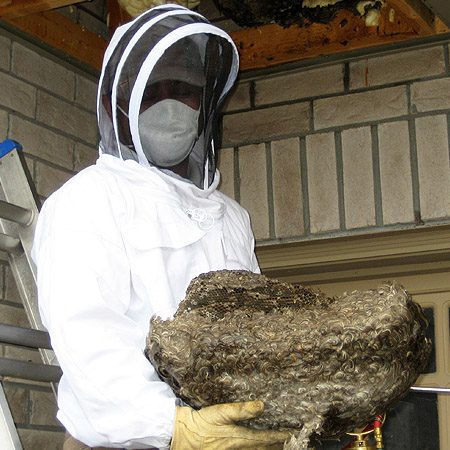 wasp nest removal east kilbride