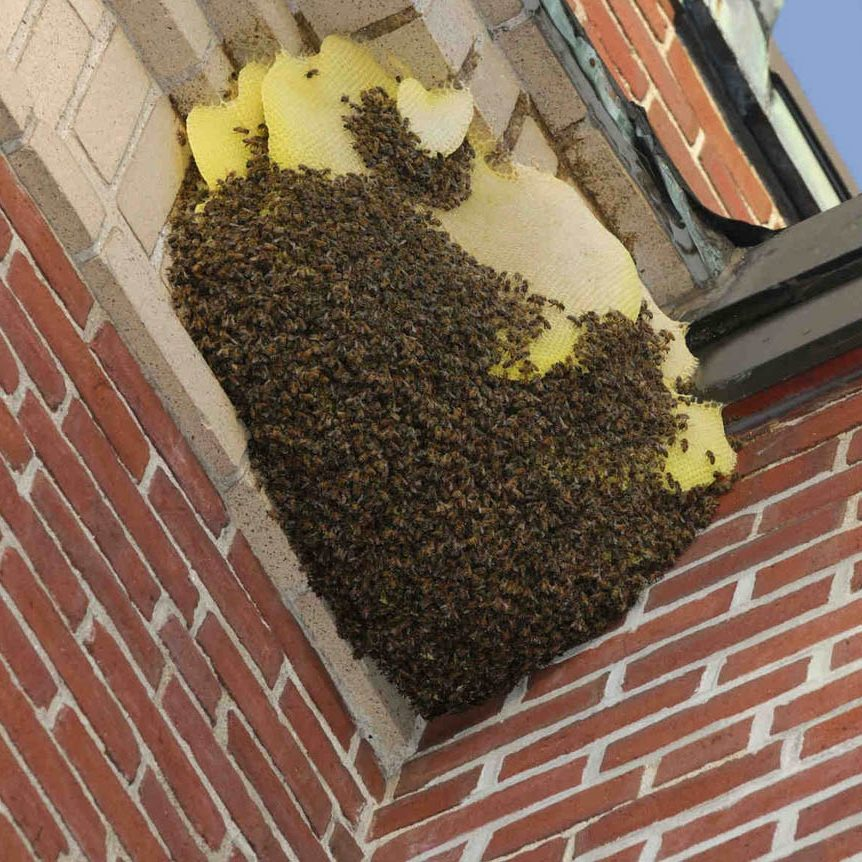 your-local-wasp-nest-removal-experts-1
